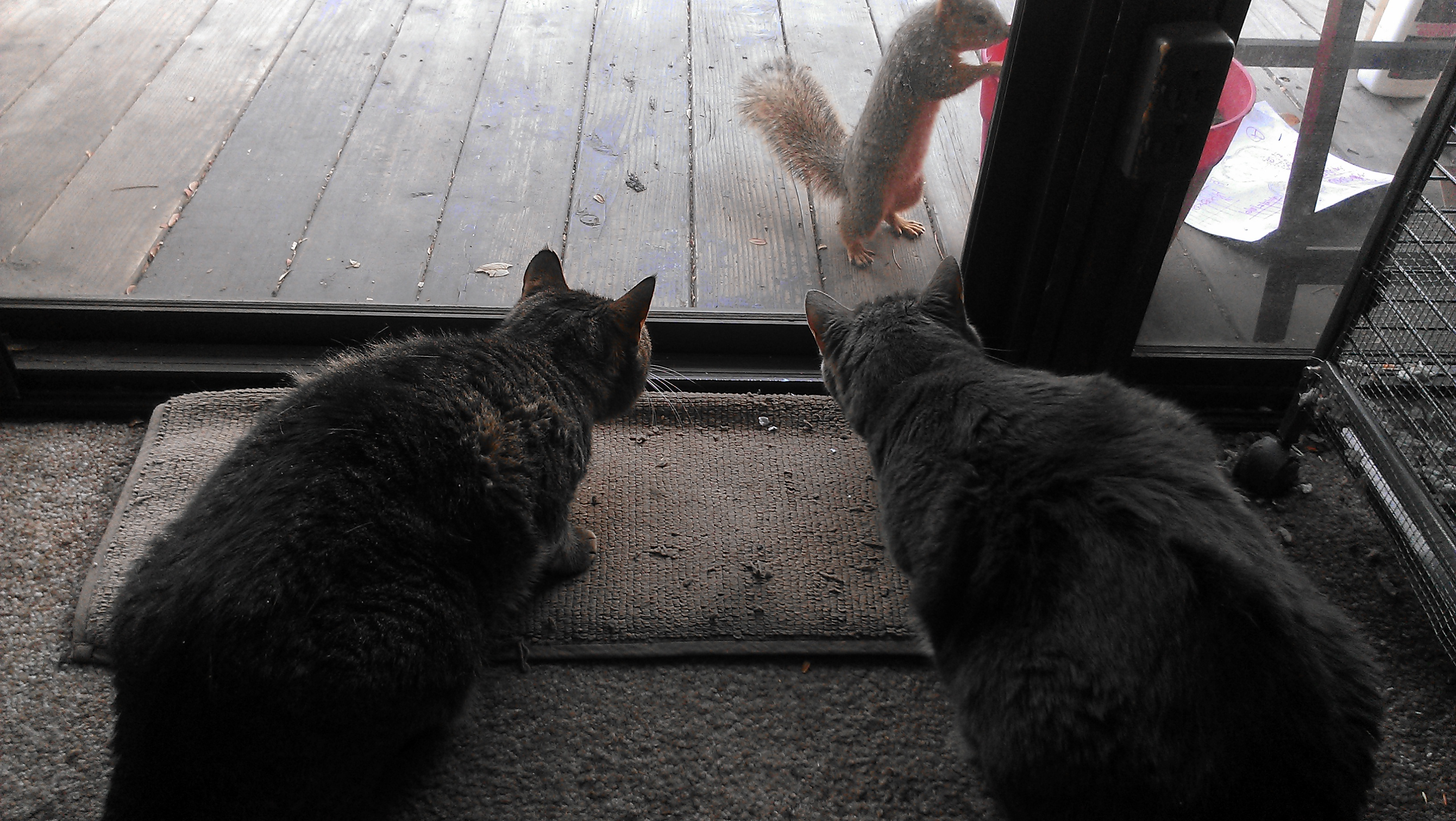 with both the cats